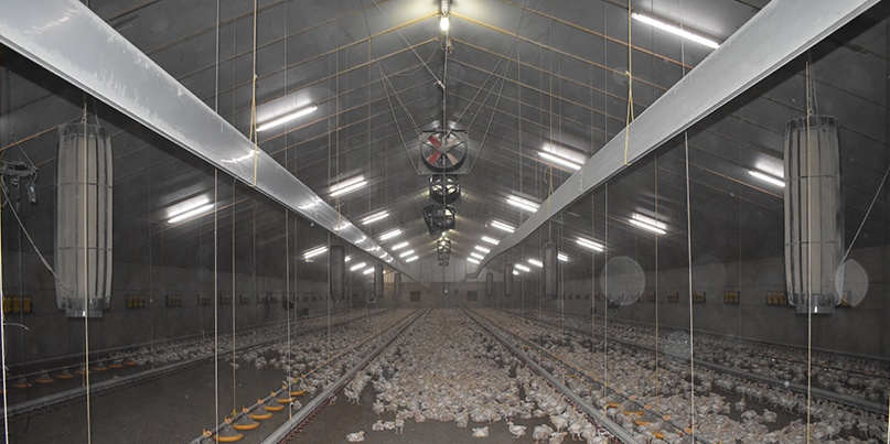 Pilot emission-reducing techniques in the poultry industry officially launched